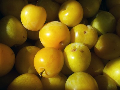 Vancouver Island grown golden plums